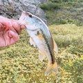 まなとさんの岩手県盛岡市での釣果写真