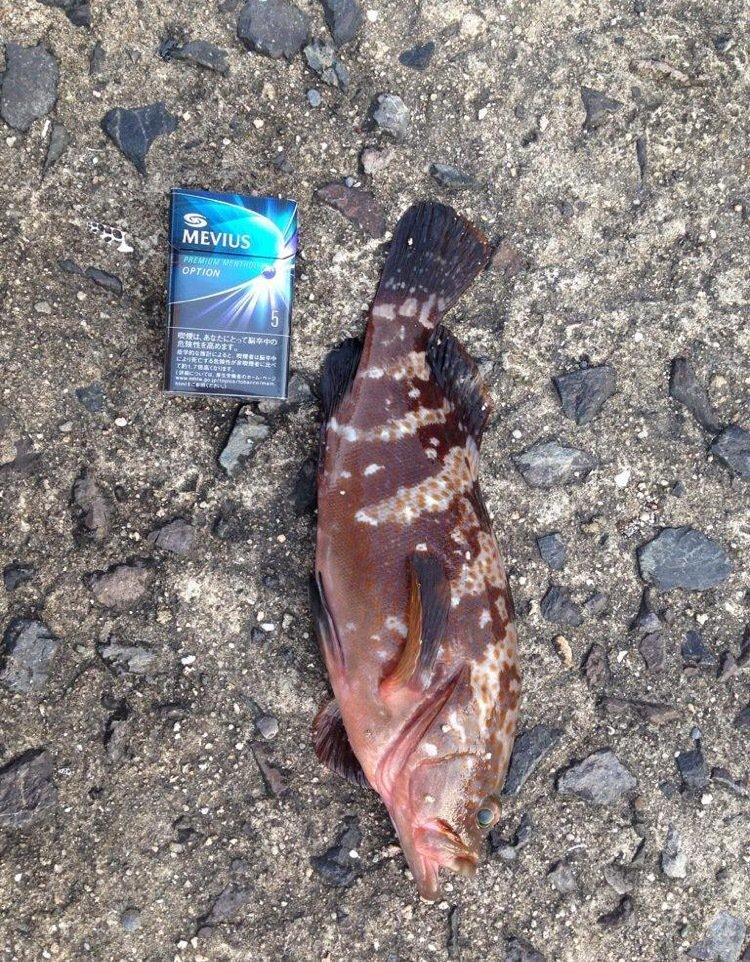 うきさんの投稿画像,写っている魚はキジハタ