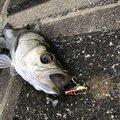ひろひさんの埼玉県川口市での釣果写真
