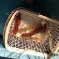 たーけしさんの福井県大飯郡での釣果写真