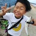 86(ハル)さんの福岡県福岡市でのコノシロの釣果写真