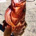 マルスさんの鹿児島県垂水市での釣果写真