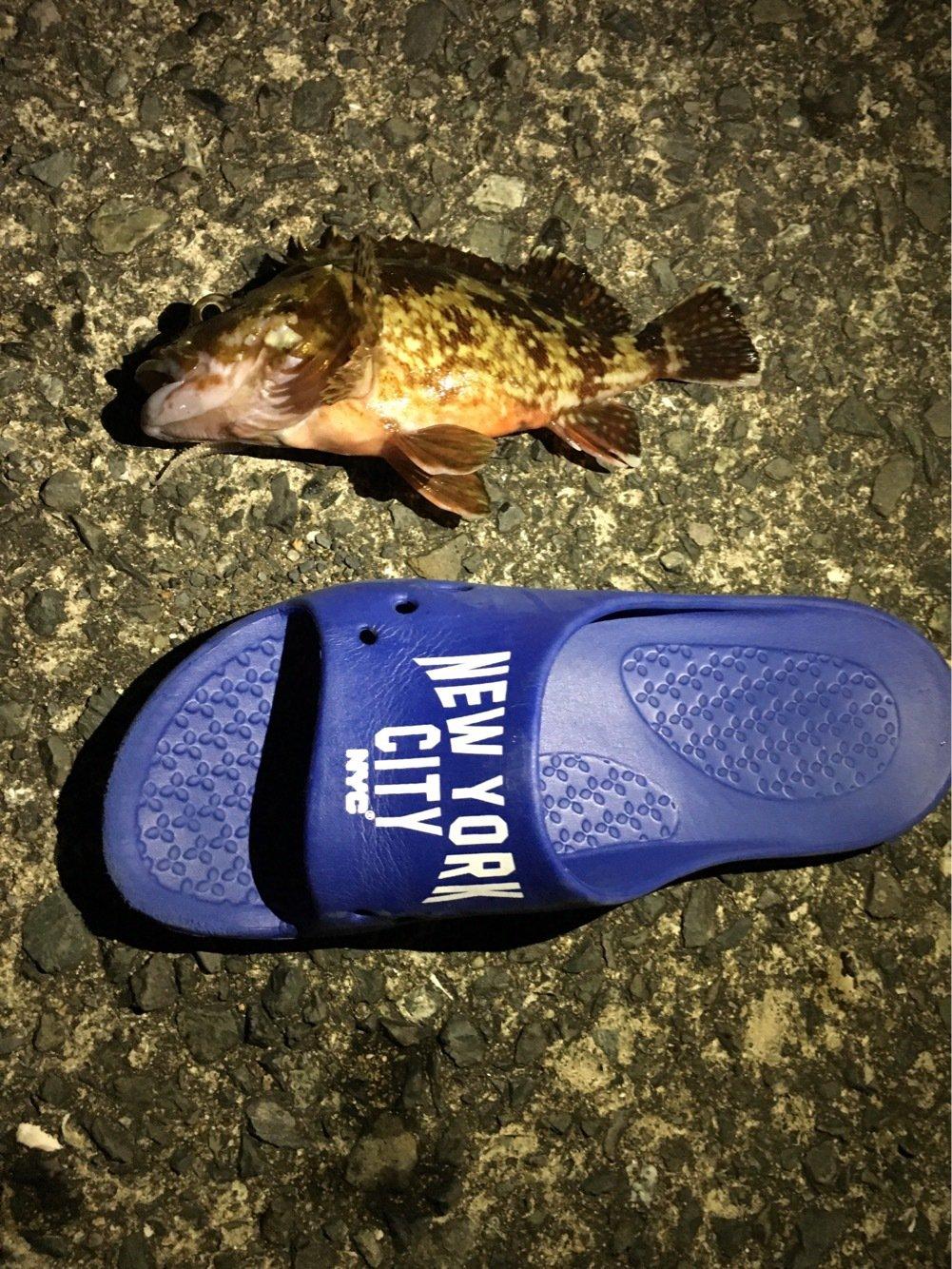 坂本 かけるさんの投稿画像,写っている魚はカサゴ