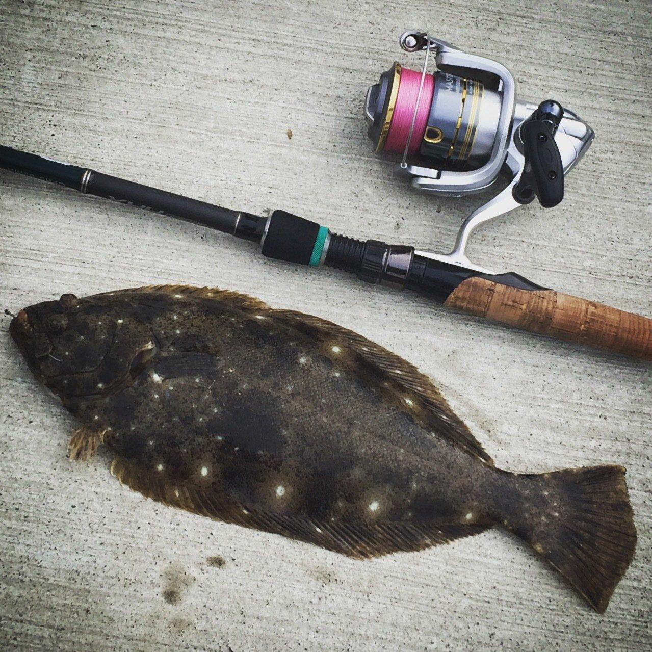 ヒロムさんの投稿画像,写っている魚はヒラメ