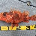 ダイスケベェさんの秋田県にかほ市での釣果写真