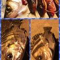 こばこーさんの神奈川県でのゴンズイの釣果写真