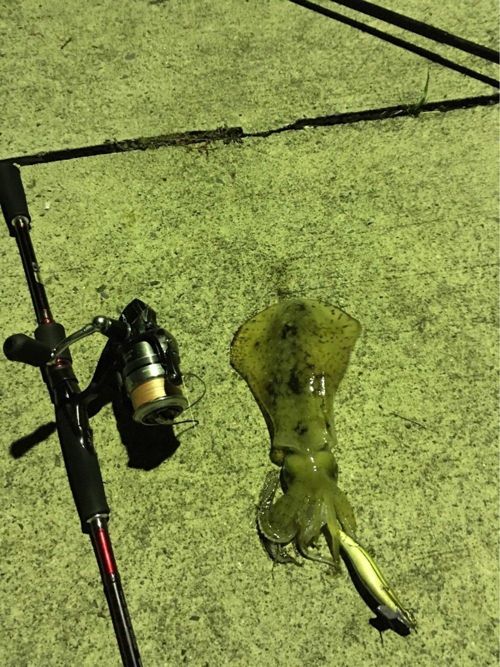 朋希さんの投稿画像,写っている魚は