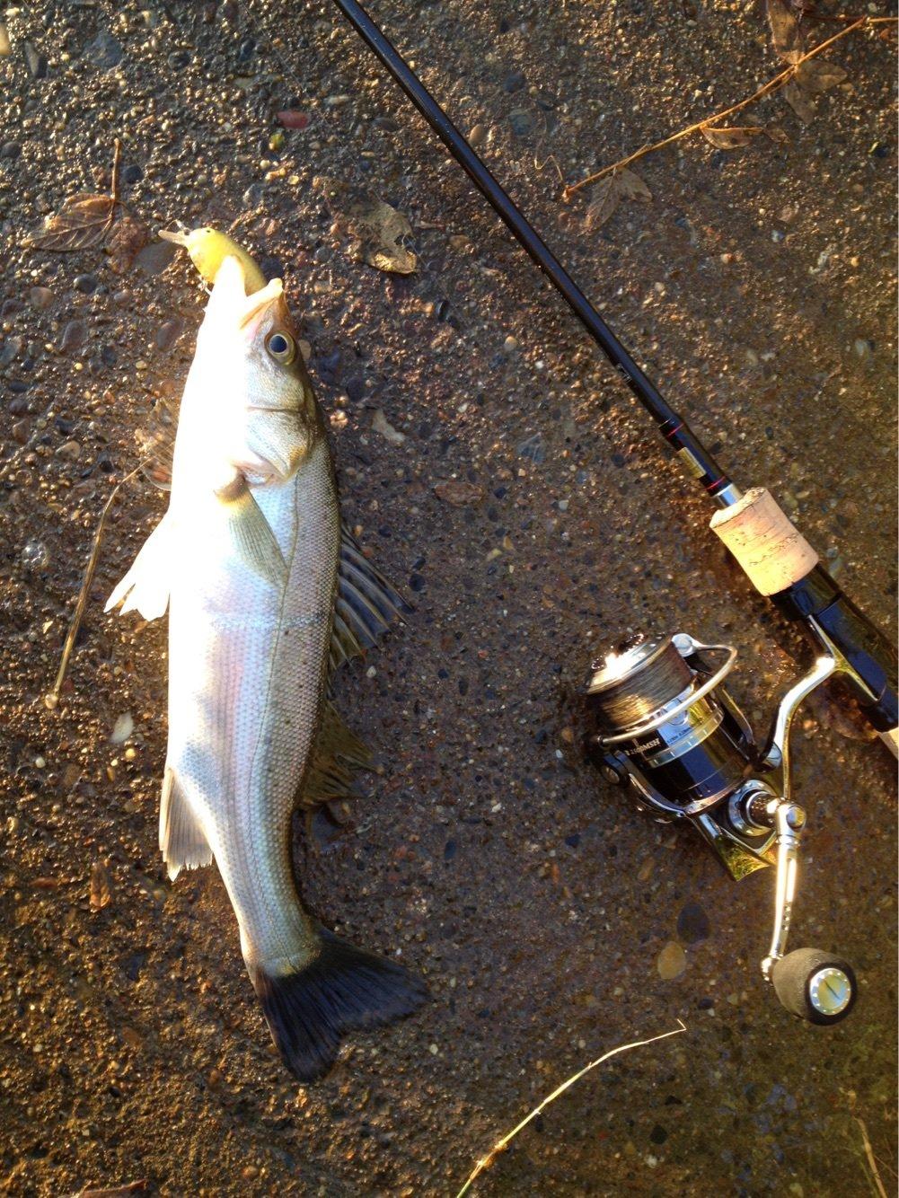 釣りキチ一平さんの投稿画像,写っている魚はスズキ