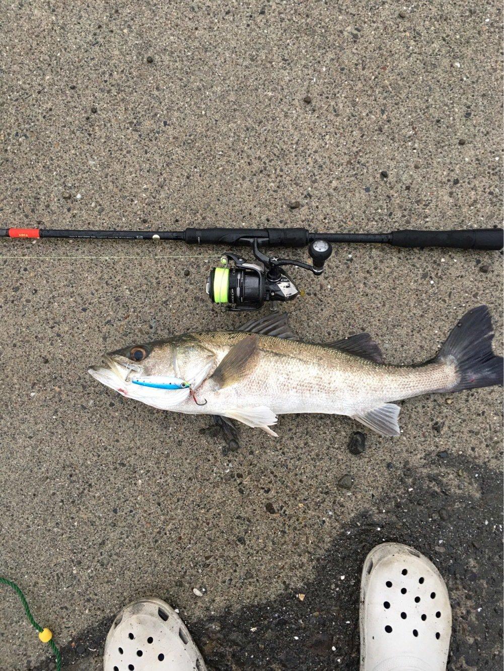 朋希さんの投稿画像,写っている魚はスズキ