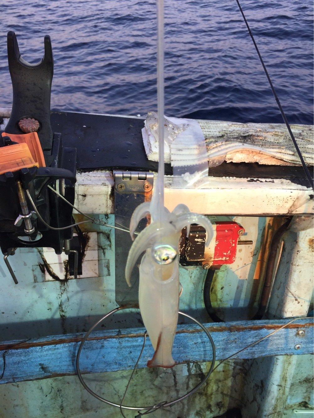 ハルさんの投稿画像,写っている魚はケンサキイカ