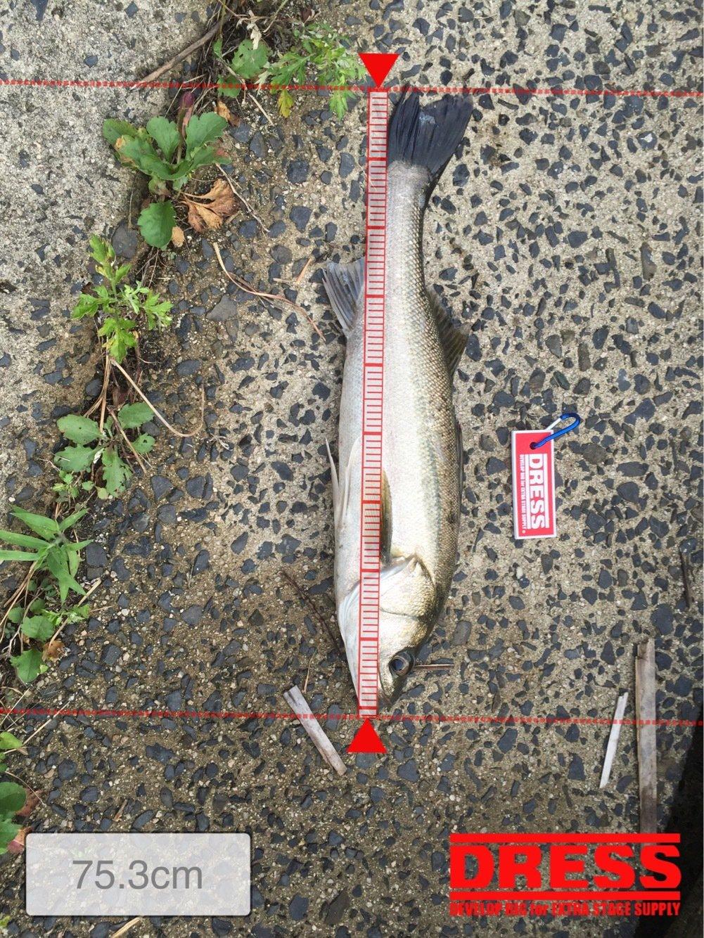 いくおさんの投稿画像,写っている魚はスズキ