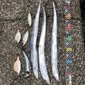 hoshino(福浦メイン!)さんの神奈川県横浜市でのタチウオの釣果写真