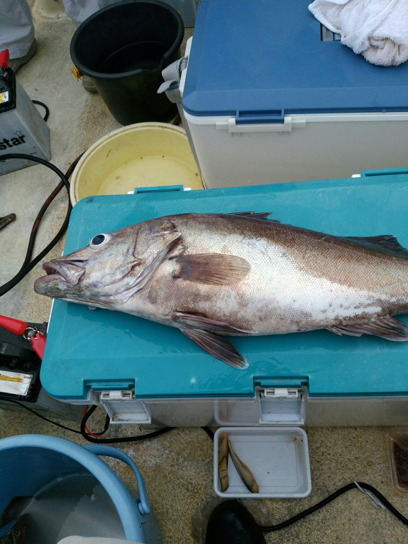 航太さんの投稿画像,写っている魚はアラ