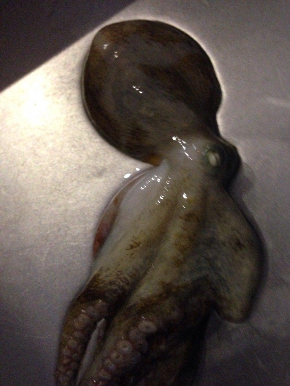 washoglassさんの投稿画像,写っている魚はマダコ