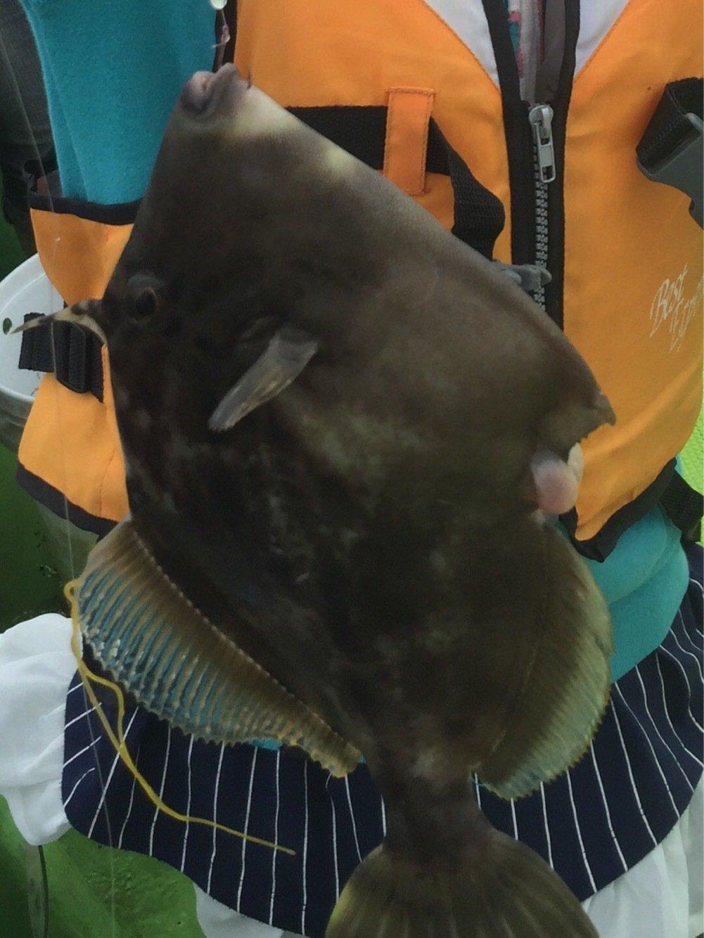 わたるさんの投稿画像,写っている魚はカワハギ