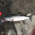 aochy0620さんの北海道斜里郡での釣果写真