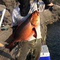 てつじんさんの鹿児島県鹿児島郡での釣果写真