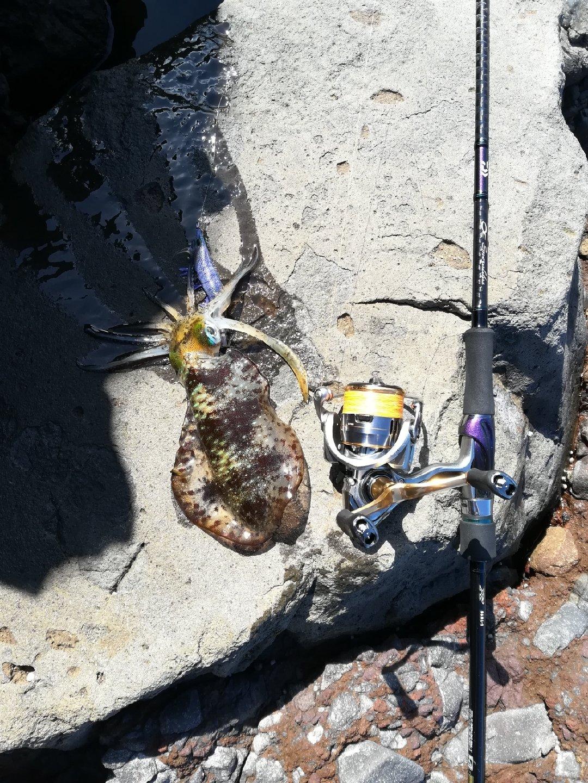 cool-0314さんの投稿画像,写っている魚はアオリイカ