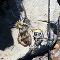 cool-0314さんの新潟県三島郡での釣果写真