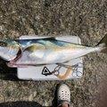 さとしさんの鹿児島県南さつま市でのヒラマサの釣果写真
