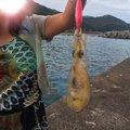 🍊さんの高知県四万十市での釣果写真