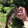 セイジさんの宮城県白石市での釣果写真