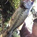 kikuchiさんの岩手県奥州市での釣果写真