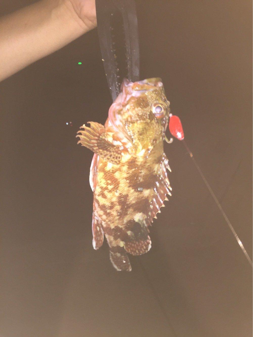 レイコさんの投稿画像,写っている魚はカサゴ