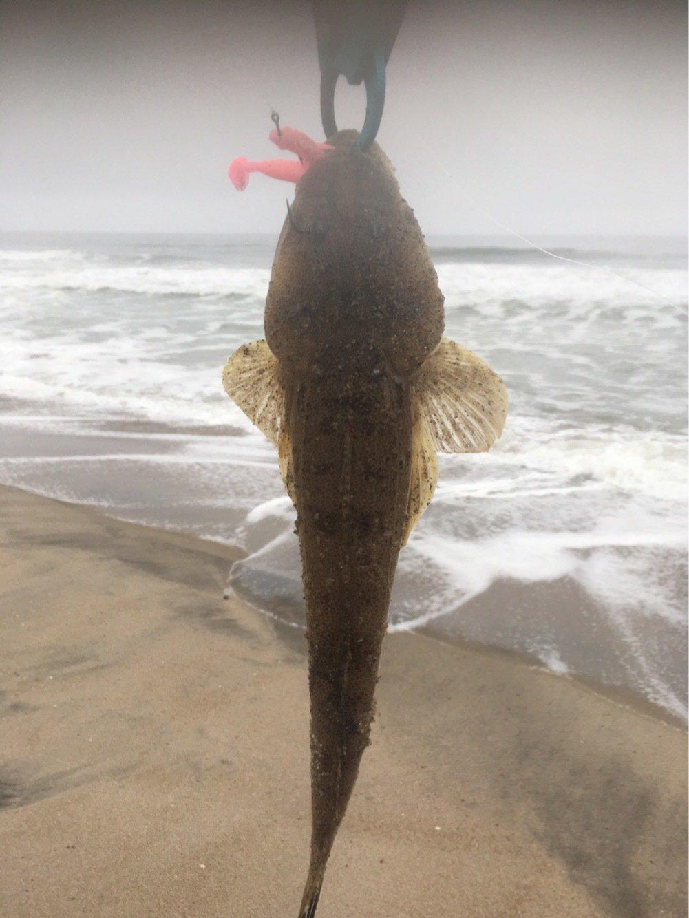 へたっぴ三ちゃんさんの投稿画像,写っている魚はコチ