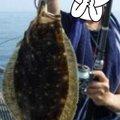 pinkumiさんの大阪府でのヒラメの釣果写真