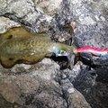 アークさんの青森県東津軽郡での釣果写真