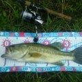 shi-basser-ki さんの茨城県北相馬郡での釣果写真