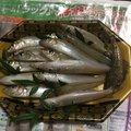 アリさんの広島県大竹市での釣果写真