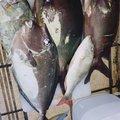 ゆうちゃんさんの沖縄県宮古島市での釣果写真