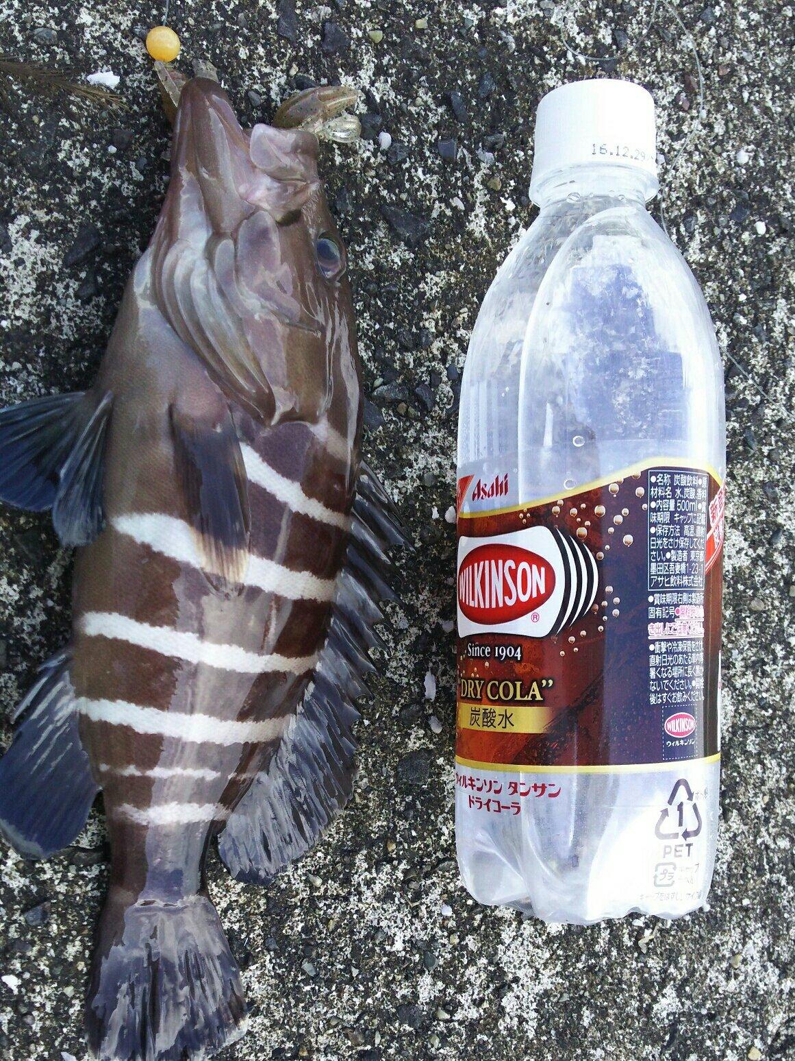 Deandre6さんの投稿画像,写っている魚はマハタ