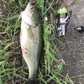 たかひろさんの徳島県板野郡での釣果写真