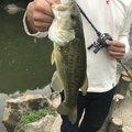 たかひろさんの香川県綾歌郡での釣果写真