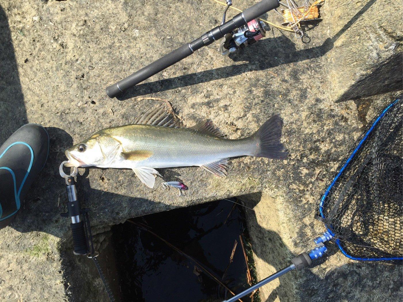 タナカさんの投稿画像,写っている魚は