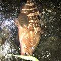junさんの愛知県弥富市での釣果写真