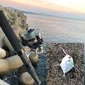 テトラポッツさんの鹿児島県日置市での釣果写真