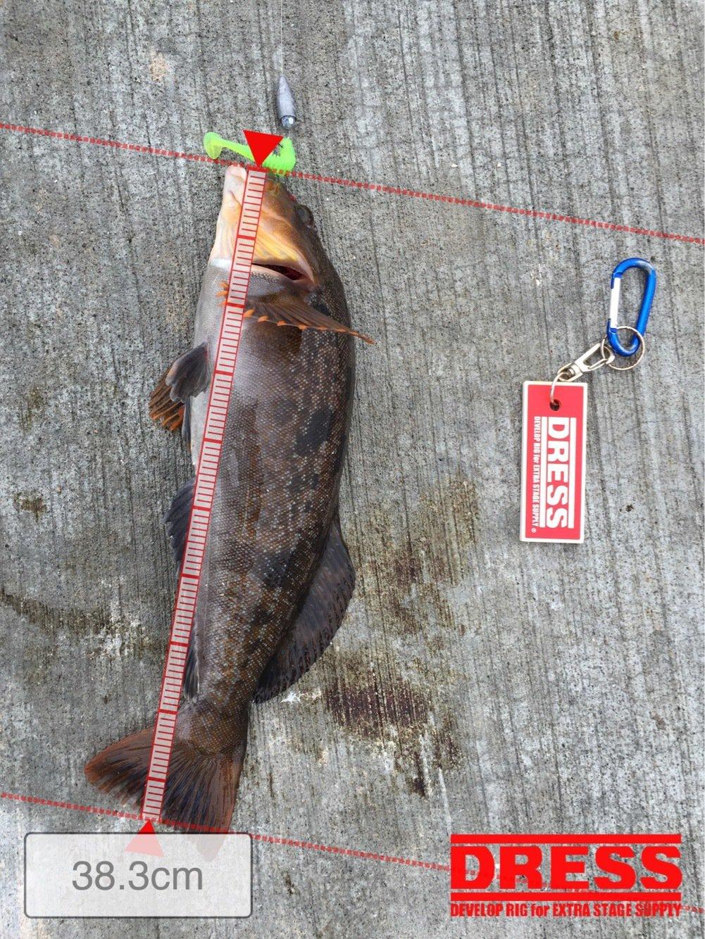 たっかぽんさんの投稿画像,写っている魚はアイナメ