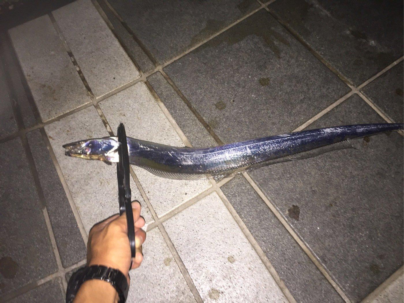 しーんさんの投稿画像,写っている魚はタチウオ