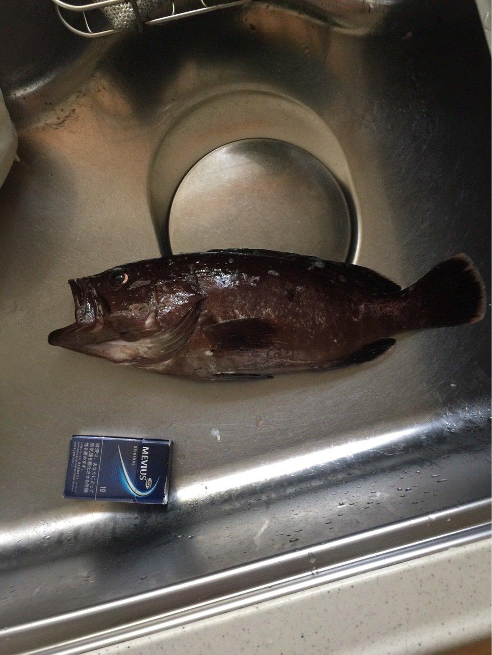 磯初心者さんの投稿画像,写っている魚は