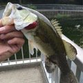 NEFさんの大阪府富田林市での釣果写真