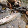TKYさんの北海道北見市での釣果写真