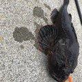 釣り Lv.26さんの北海道野付郡での釣果写真