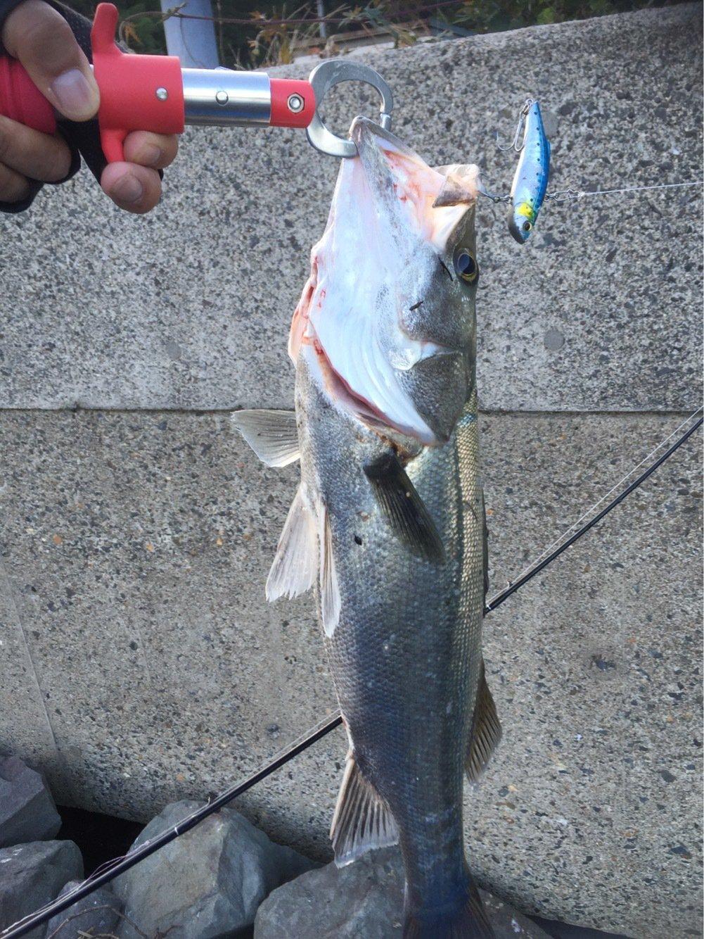 ノリヒロさんの投稿画像,写っている魚はスズキ