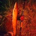 しんパパさんの青森県つがる市でのナマズの釣果写真