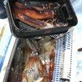 Aniki@3さんのケンサキイカの釣果写真