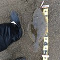ニシさんの北海道上磯郡での釣果写真